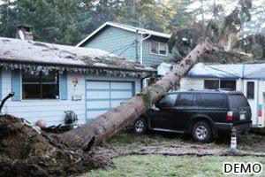 11_Storm or Wind Damage
