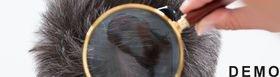 Head Lice Checks